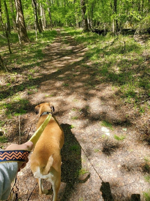 A dog walking along a wooded path in First Landing State Park