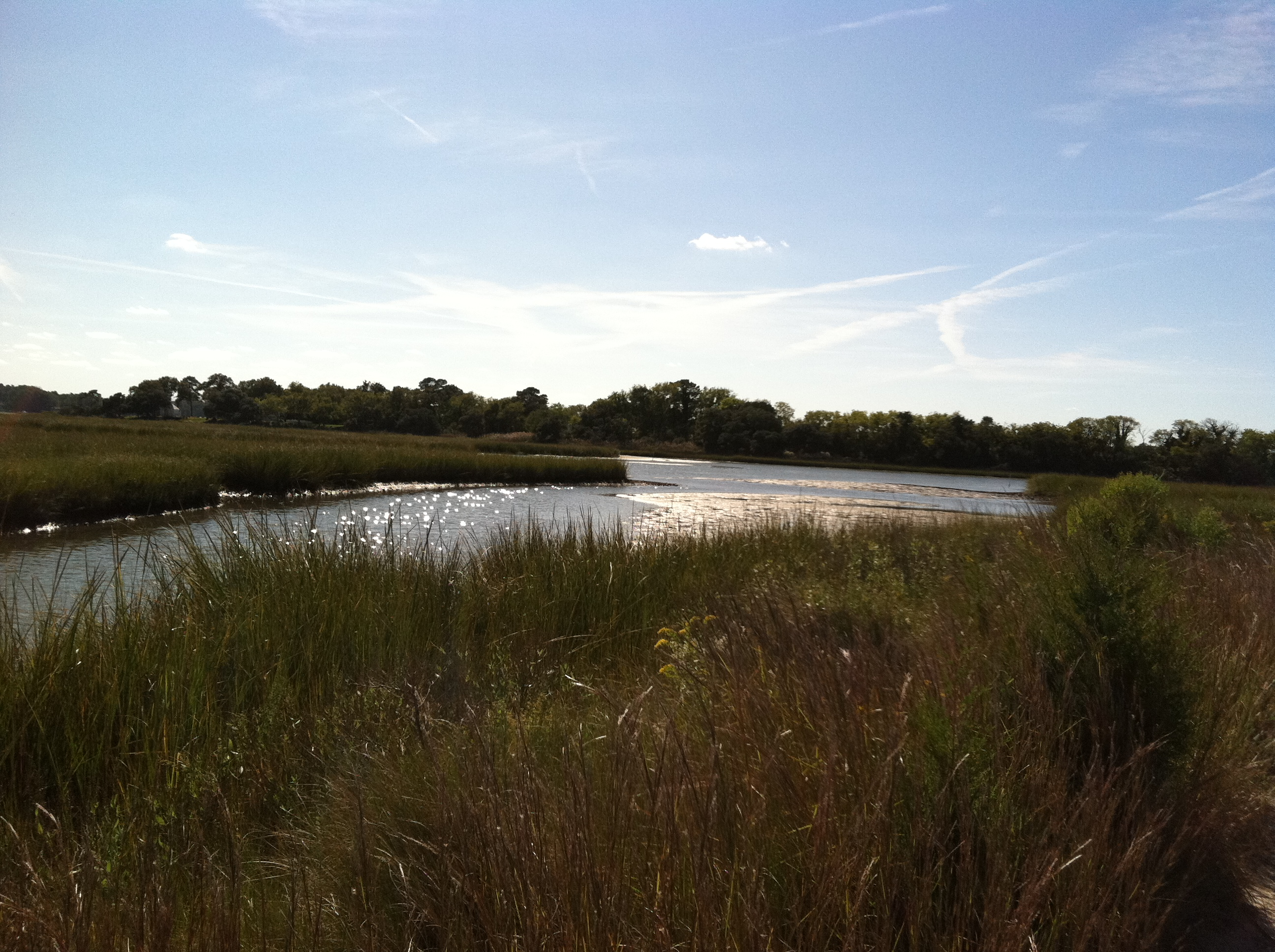 Lynnhaven River Wetlands Restoration