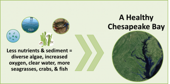 Graphic depicting ingredients for a healthy Chesapeake Bay-less nutrients & sediment equals diverse algae, increased oxygen, clean water, more seagrasses, crabs and fish