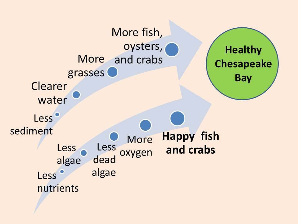 Healthy Chesapeake Bay